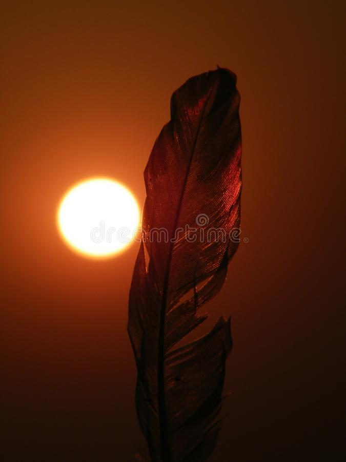 Feather in font of the sun. It is a picture of feather which click in the evening stock images