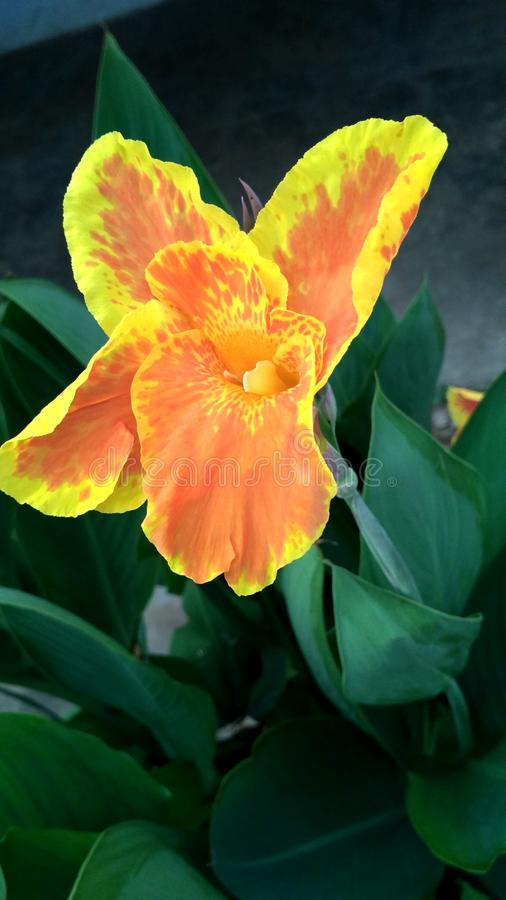 A flower. This is a picture of flower stock photos