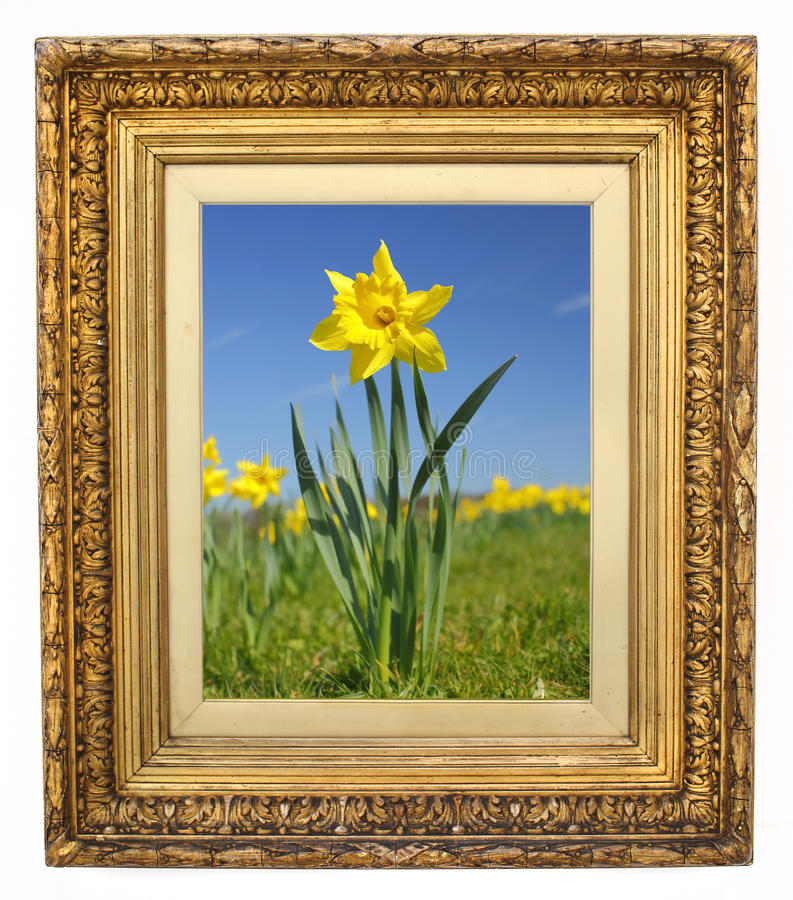 Free Picture Frame Stock Images - 19044044