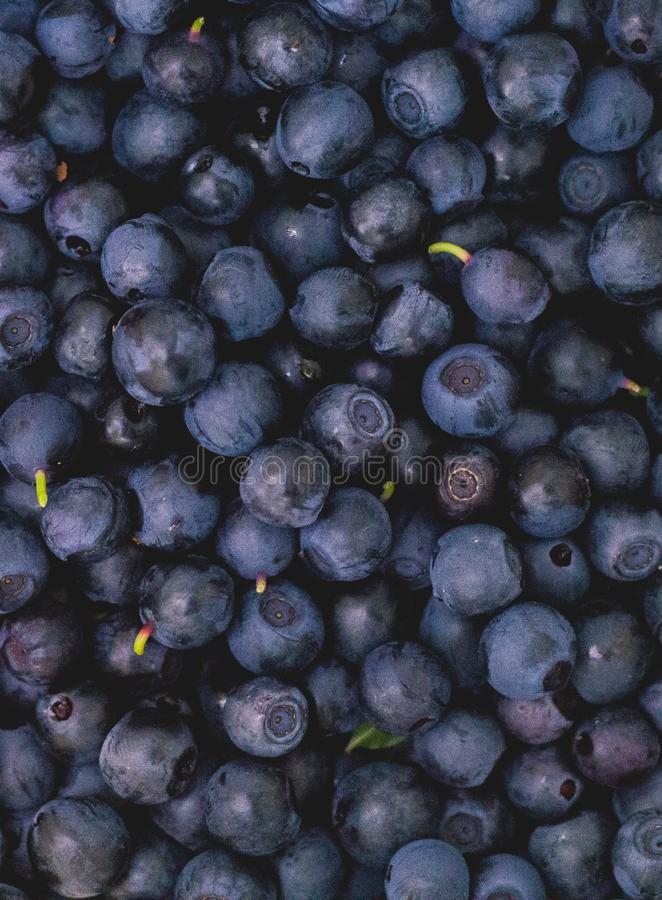 Just picked up fresh blueberries stock image