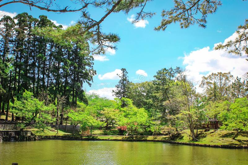 Picture of green calming, refreshing lake located in Nara Park, one of travel or tourism destination in Japan. Picture green calming refreshing lake located nara royalty free stock photography