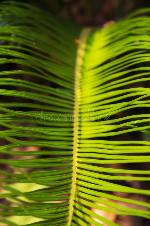 Green leaves of a palm plant at the Magnolia plantation in Charleston South Carolina. A picture of the green leaves of a palm plant at the Magnolia plantation in royalty free stock photos