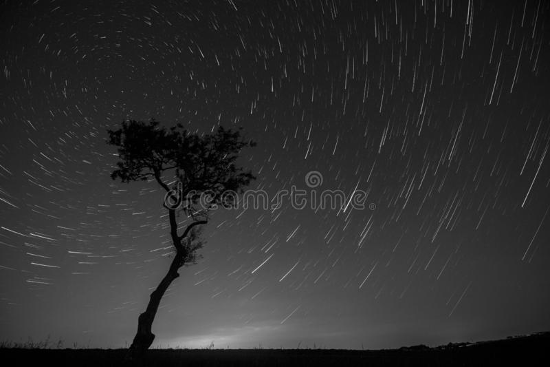 The star-trail tree stock photos