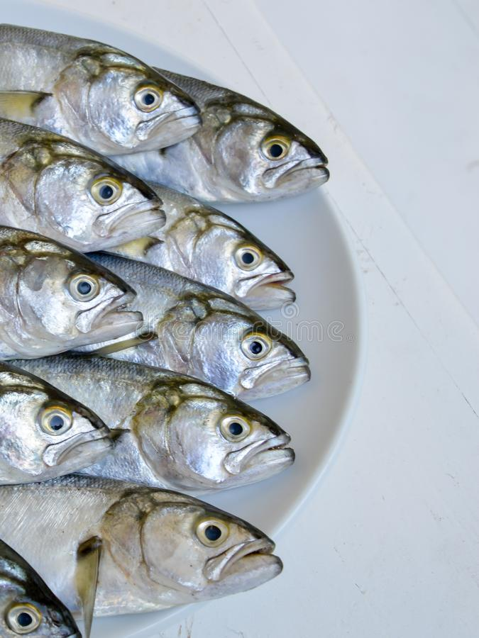 Picture of the heads and part of the body of the fresh bluefish. Seafood.Fishing royalty free stock photos