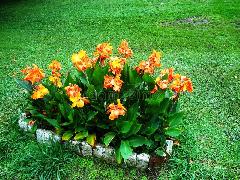 Floral world. A picture from a lovely garden of shillong situated at meghalaya royalty free stock photos