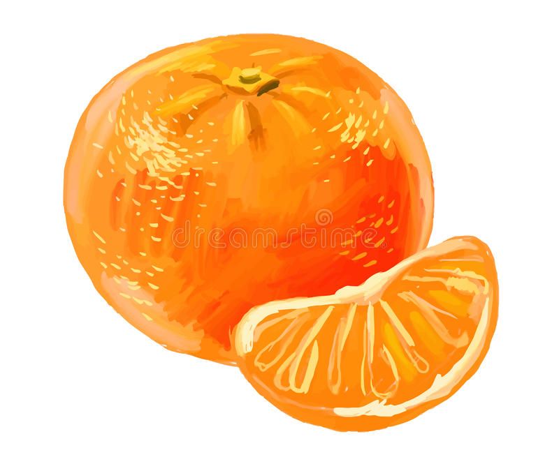 Picture of mandarin. Vector paint hand drawn picture of mandarin vector illustration