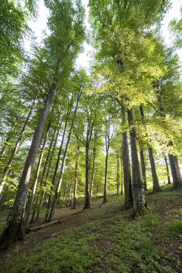 Free Picture Of A Trees In Forest Stock Photo - 41628110
