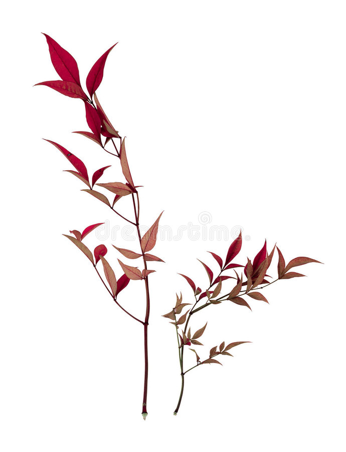 Free Picture Of Plants Stock Photo - 678040