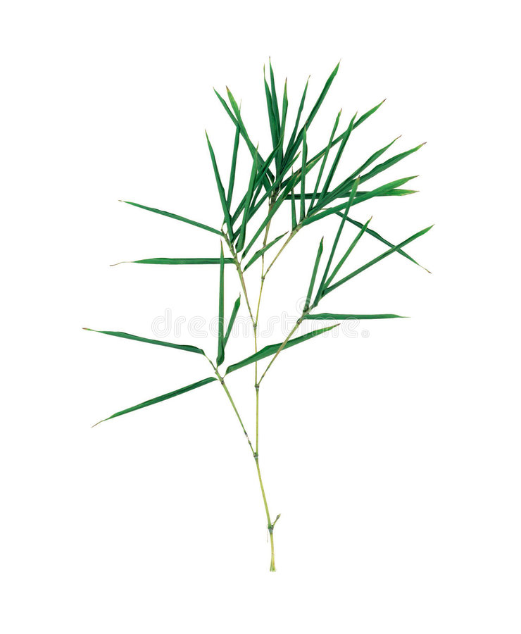 Free Picture Of Plants Stock Images - 678044