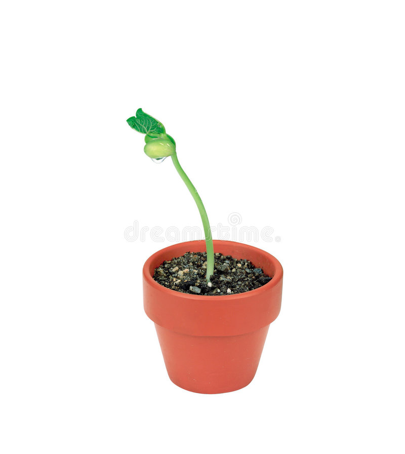 Free Picture Of Plants Royalty Free Stock Photos - 678108