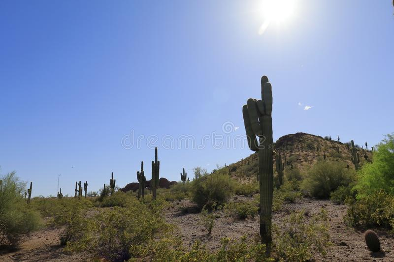 Desert and cactus picture with sun shining. Picture in the Phoenix Botanical Gardens, desert like with cactus, with bright blue sky and sun royalty free stock photography