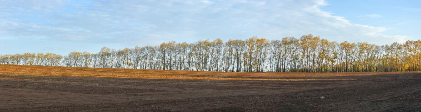 Picture 3032 by 11,300 pixels. Poplars in autumn. Alley of trees royalty free stock image