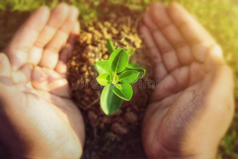 Picture of Plant. Isolated on white background royalty free stock photo