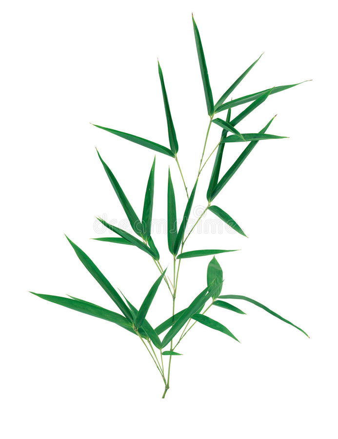 Picture of Plants royalty free stock photos