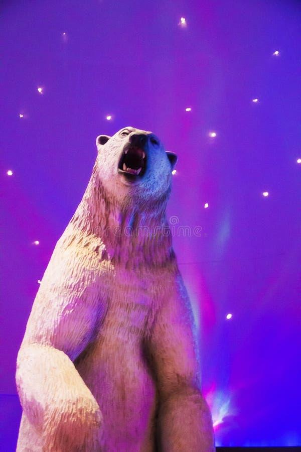 Polar bear at the Mystic Aquarium in Mystic Connecticut. A picture of a polar bear at the Mystic Aquarium in Mystic Connecticut stock photos