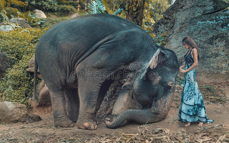 Picture presenting woman taming an elephant stock photo