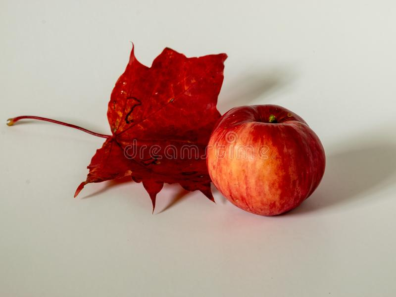 Picture with red apples on colored maple leaf background. Simple picture with red apples on colored maple leaf background stock images