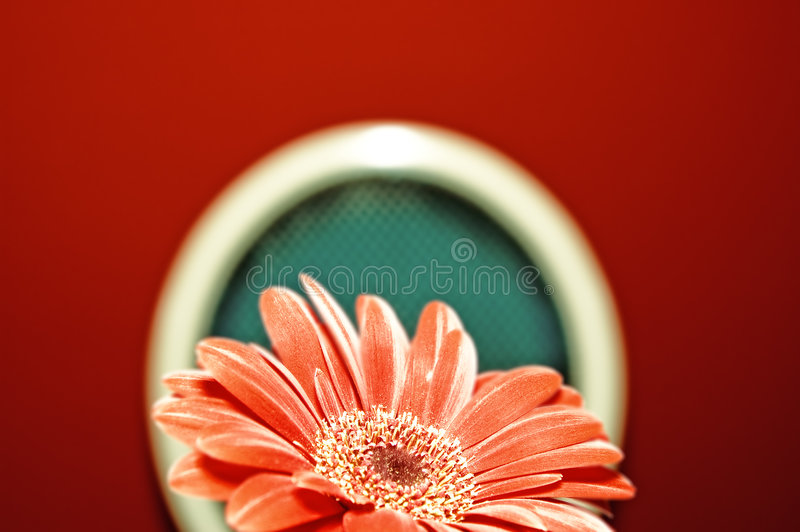 Picture of a red flower royalty free stock photo
