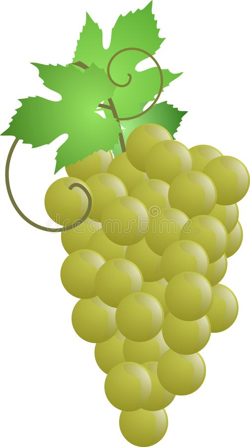 Bunch of grapes with three green leaves royalty free stock photos
