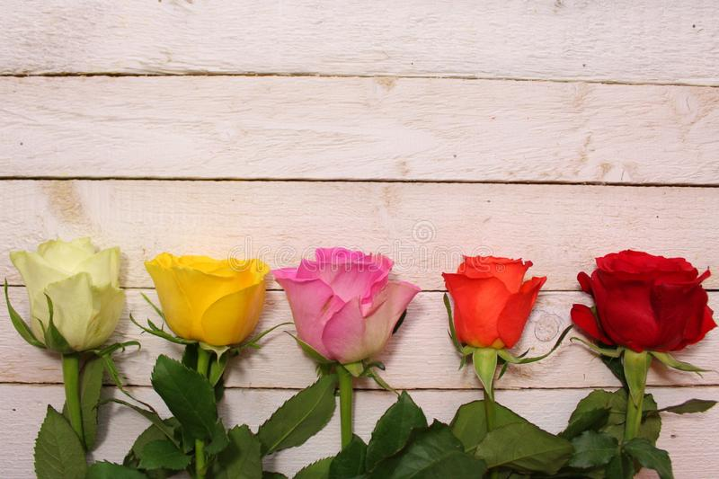 Border with roses royalty free stock images