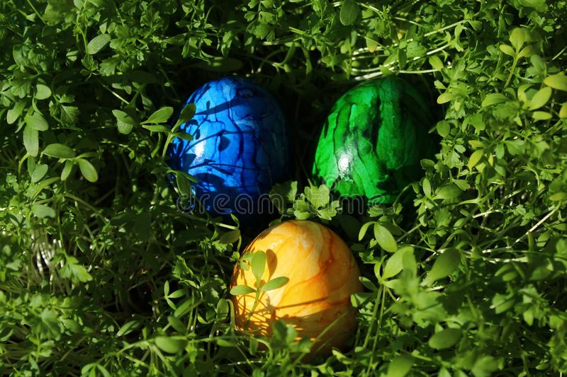 Eastereggs in cress. The picture shows eastereggs in cress royalty free stock photography