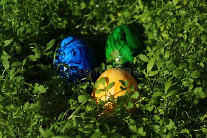 Eastereggs in cress. The picture shows eastereggs in cress stock images