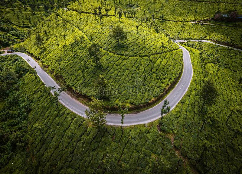 Smile of Munnar. This picture shows the tea estate of munnar in Idukki district , kerala royalty free stock photography