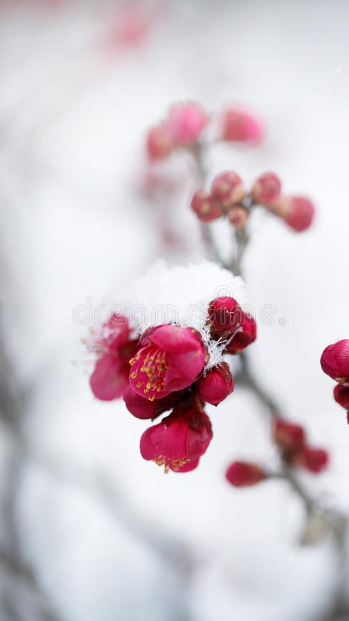 Snow flower royalty free stock photos