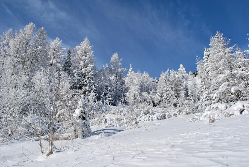 Picture of Snow Mountain Landscape in Chamonix, France. stock images