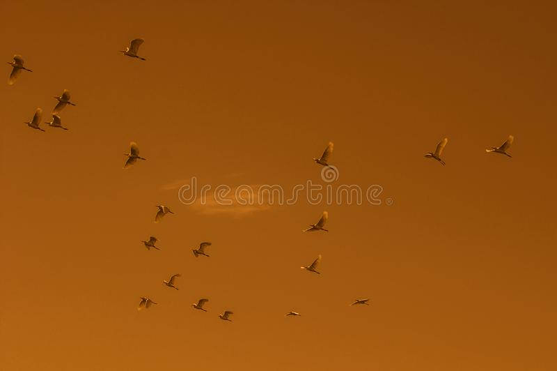 Birds in the flight royalty free stock photo