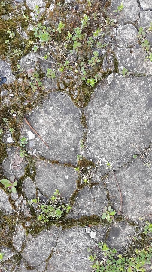 Stone with moss texture stock photo