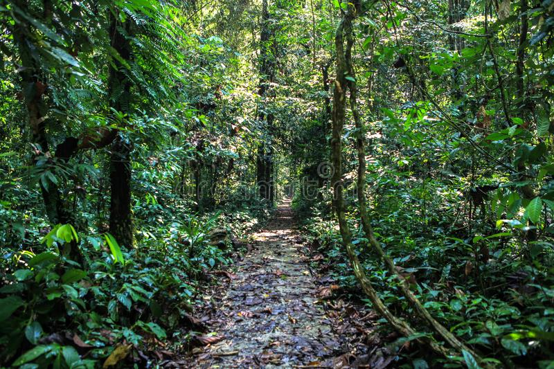 Nature of Gunung Mulu National Park of Sarawak, Malaysia. This picture is taken in Sarawak. The Gunung Mulu National Park is a national park in Miri Division royalty free stock photo