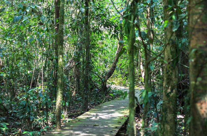 Nature of Gunung Mulu National Park of Sarawak, Malaysia. This picture is taken in Sarawak. The Gunung Mulu National Park is a national park in Miri Division stock image