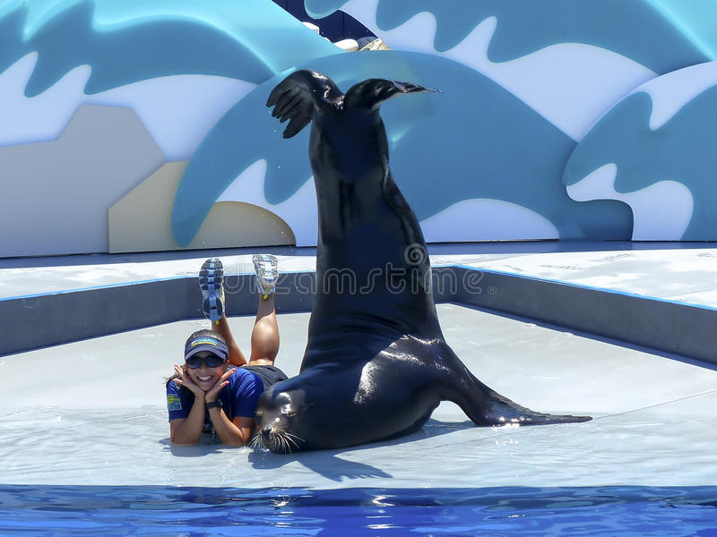 Picture Time. Sea lion and its trainer pose during a demonstration at the New York Aquarium