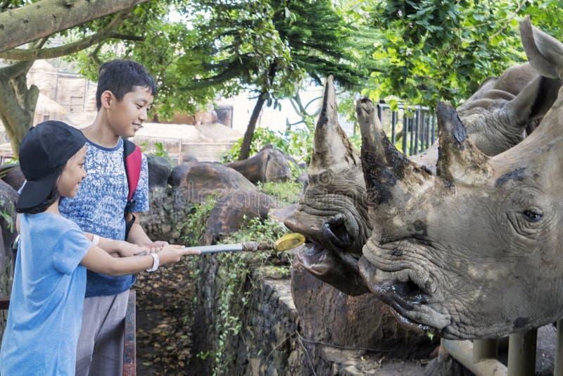 Two children feeding white rhinos stock images