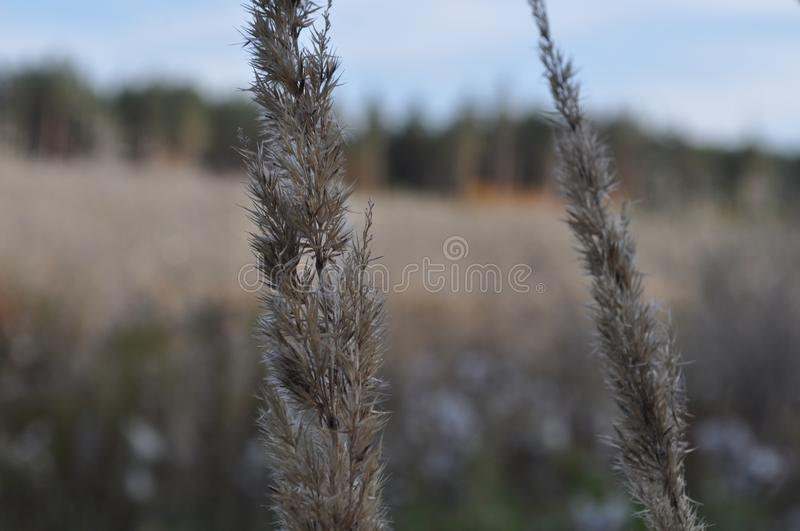 Plants on the meadow royalty free stock images