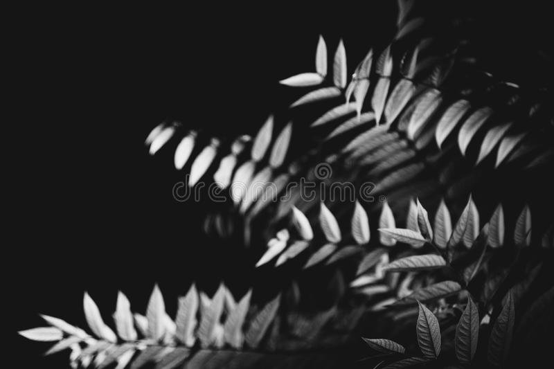 Leaves in the dark night background royalty free stock image