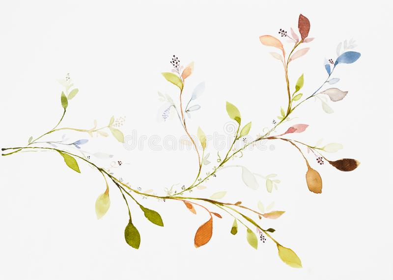 Picture water colour, hand draw, leaves, branches, ivy vector illustration