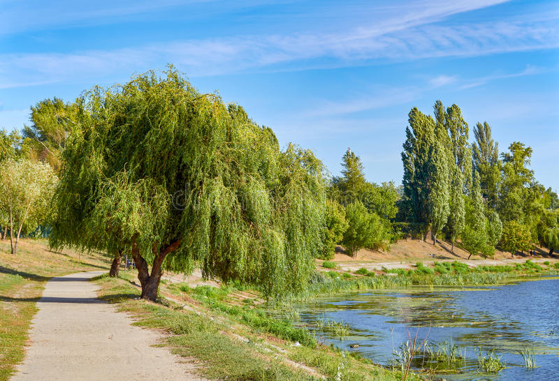 Picture of willow and path at bank of pond. Picture of willow and path at bank of pond royalty free stock photo