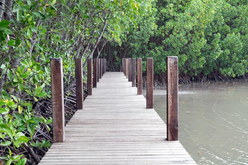 Picture of a wooden walkway to study the nature of the mangrove forest stock photos
