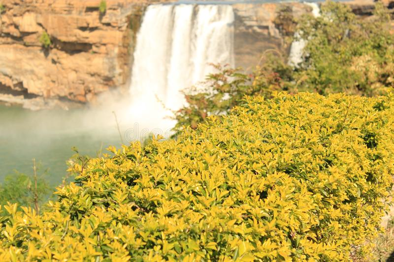 Yellow Leaves Small tree and Chitrakot  Waterfall. Picture of a Yellow leave small tree and beautiful chitrakot waterfall in behind as shadow in day light  time stock images