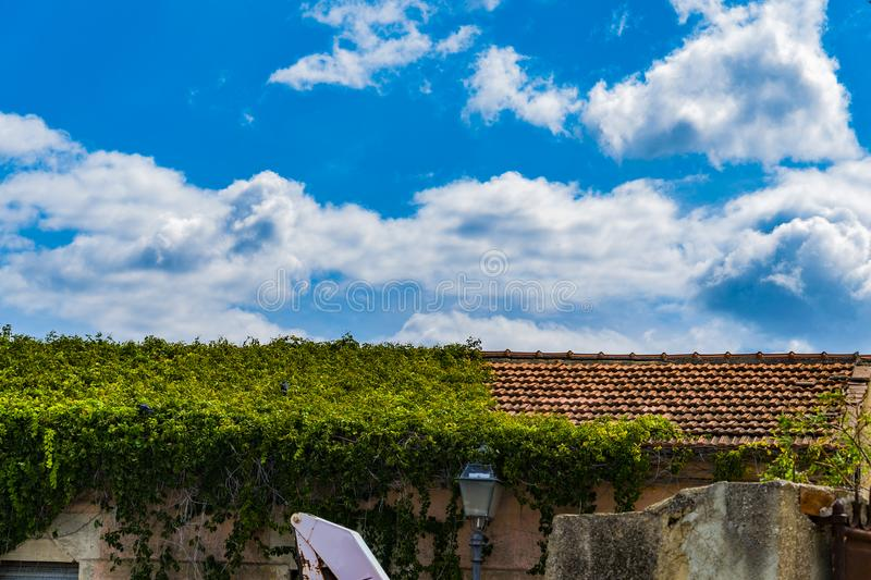 Vegetation taking over the roof royalty free stock images