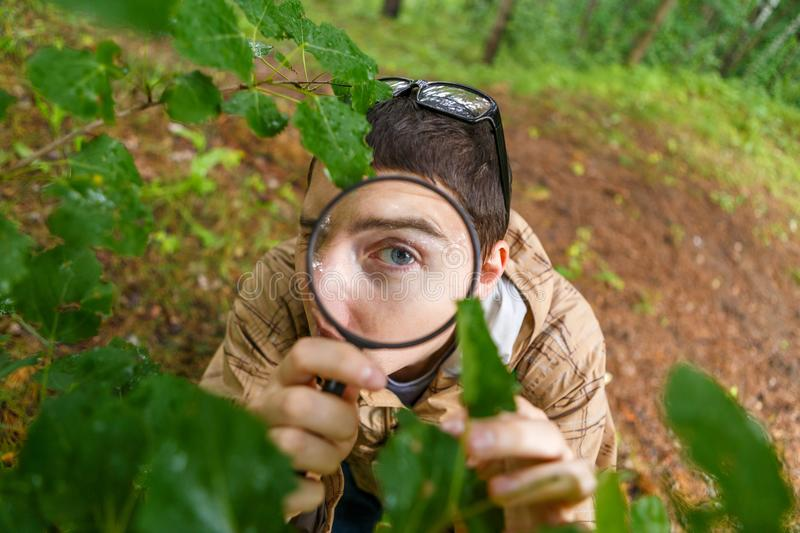 Picture of young ecologist with magnifying glass. In forest on summer day royalty free stock photo