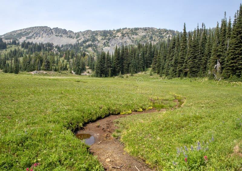 Pictured är en äng i monteringen Rainier National Park, Washington royaltyfri foto