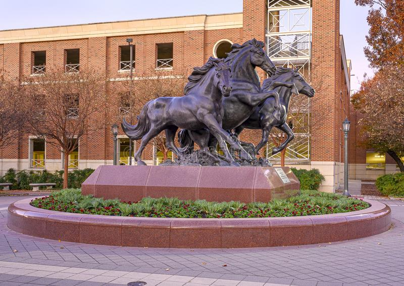`SMU Mustangs`, a bronze sculpture by artist Miley Frost ont he campus of Southern Methodist University in Dallas, Texas. Pictured is a bronze sculpture by royalty free stock photo