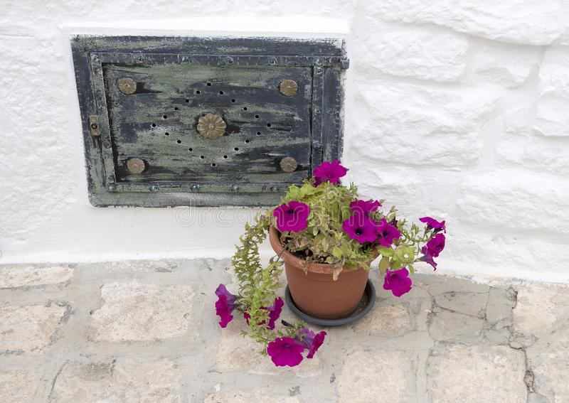Purple morning glory in a clay pot on the street in Alberobello, Italy royalty free stock photo
