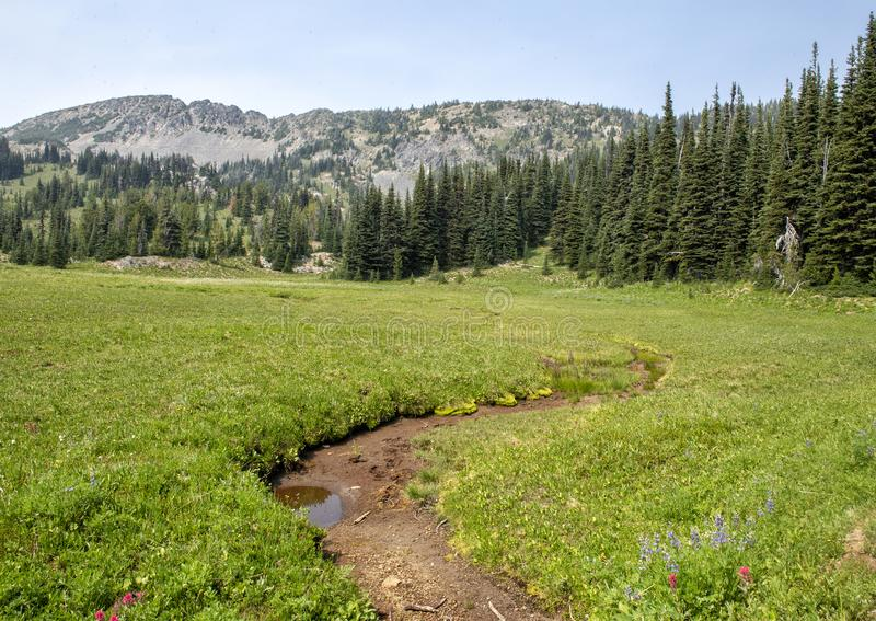 Pictured is a meadow in Mount Rainier National Park, Washington royalty free stock photo
