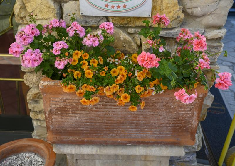 Orange petunias and pink geraniums in a planter in Camogli, Italy stock photography