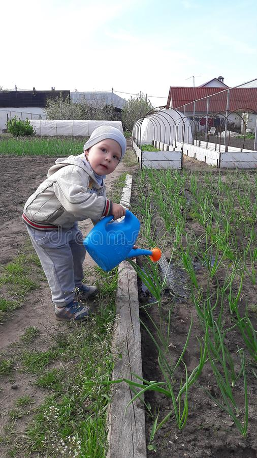 Cute little boy watering onions the spring in the garden royalty free stock photography