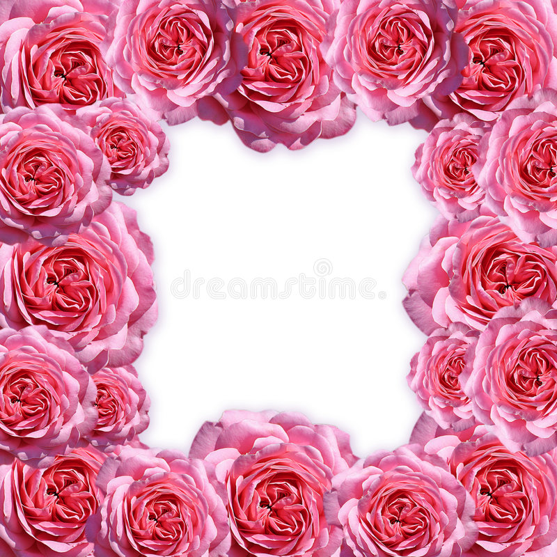 pictureframe玫瑰 向量例证